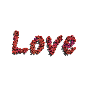 love create by red color flowers white backgroundの写真素材 [FYI00643169]