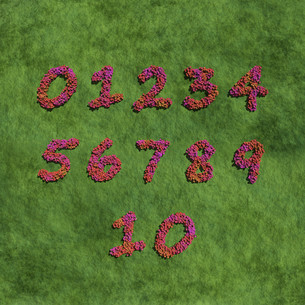 numbers create by red color flowers with grass.jpgの写真素材 [FYI00643203]