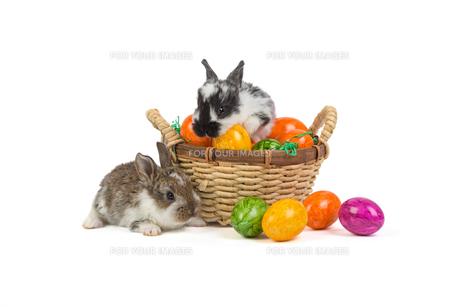 bunnies / easter bunnyの写真素材 [FYI00643515]