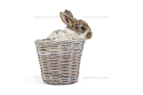 bunnies / easter bunnyの写真素材 [FYI00643518]