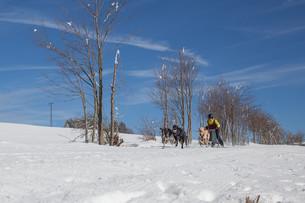 german championship sled dog race frauenwald 2015の素材 [FYI00643520]