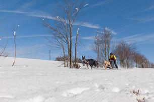 german championship sled dog race frauenwald 2015の素材 [FYI00643523]