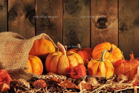 pumpkin bagの素材 [FYI00643741]