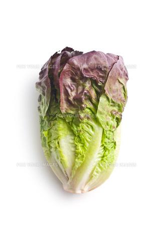 red lettuceの写真素材 [FYI00644012]