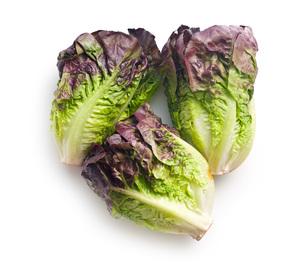 red lettuceの写真素材 [FYI00644013]