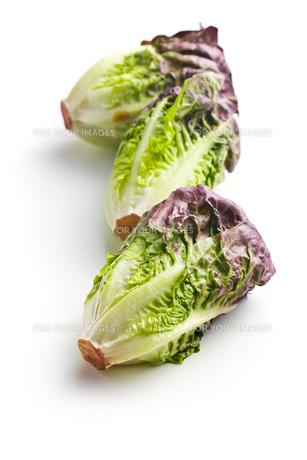 red lettuceの写真素材 [FYI00644014]