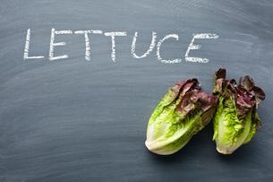 red lettuceの写真素材 [FYI00644015]