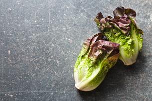 red lettuceの写真素材 [FYI00644017]