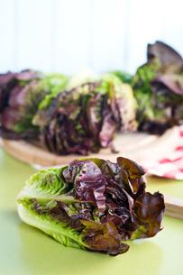 red lettuceの写真素材 [FYI00644020]