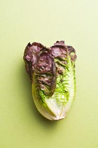 red lettuceの写真素材 [FYI00644021]