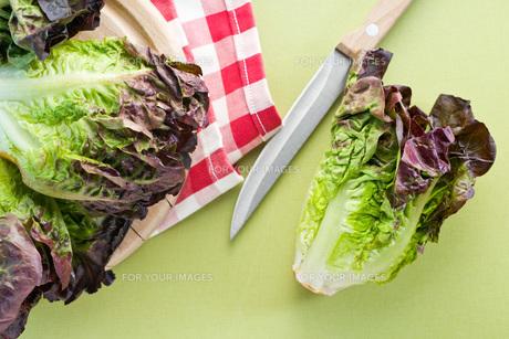 red lettuceの写真素材 [FYI00644022]