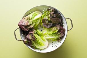red lettuceの写真素材 [FYI00644023]
