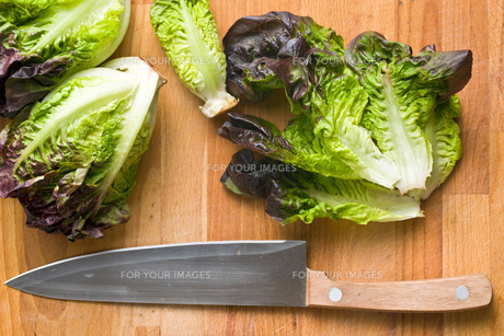 red lettuceの写真素材 [FYI00644026]