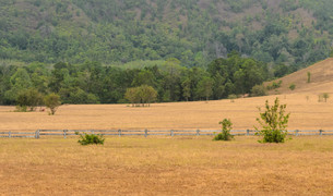 Grass Hill (Phukhao Ya) or Bald Hill (Khao Hua Lan) in Ranong province, Southern Thailandの写真素材 [FYI00644216]