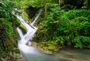 Waterfall in tropical rain forest, Thailandの写真素材 [FYI00644219]