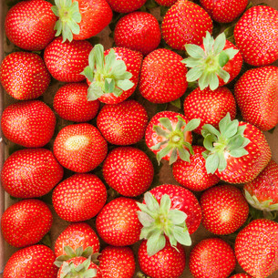 fresh ripe strawberriesの写真素材 [FYI00644388]