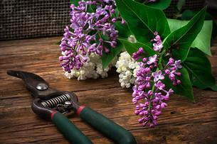 plants_flowersの写真素材 [FYI00644467]