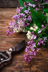 plants_flowersの写真素材 [FYI00644475]