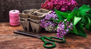 plants_flowersの写真素材 [FYI00644617]