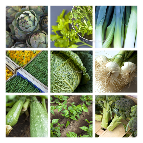 Vegetableの写真素材 [FYI00644804]