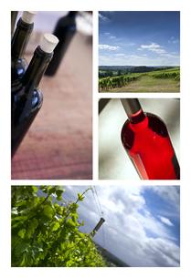 Wine and vineyardsの写真素材 [FYI00644823]