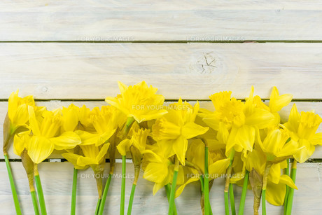 Daffodils on a wooden backgroundの写真素材 [FYI00645005]
