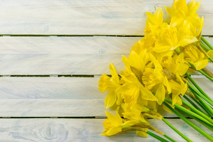 Daffodils flowers on woodの写真素材 [FYI00645010]
