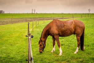 Horse eating green grassの写真素材 [FYI00645021]