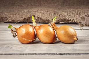 Onions on a rowの写真素材 [FYI00645029]