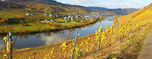 mosel valley panoramaの写真素材 [FYI00645061]