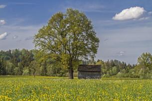 gaissacher peat meadowsの写真素材 [FYI00645232]
