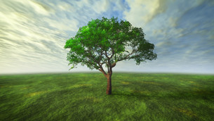 3D cloud and tree with green conceptの写真素材 [FYI00645307]