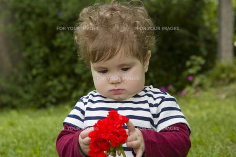 young baby girlの写真素材 [FYI00645379]