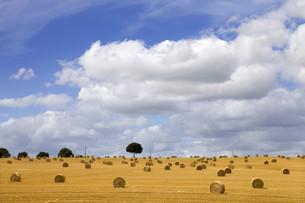dry hayの写真素材 [FYI00645500]