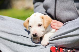 Mixed-breed cute little puppy in lap.の写真素材 [FYI00645552]