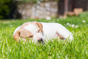 Mixed-breed cute little puppy on grass.の写真素材 [FYI00645553]