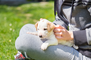 Mixed-breed cute little puppy in lap.の写真素材 [FYI00645554]
