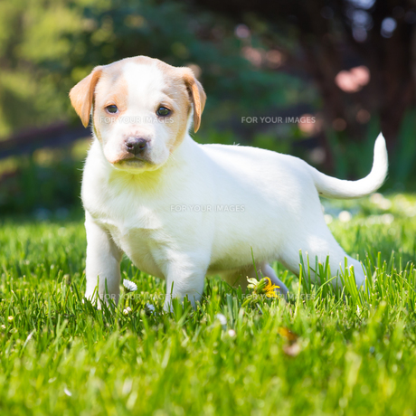 Mixed-breed cute little puppy on grass.の写真素材 [FYI00645557]