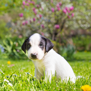 Mixed-breed cute little puppy on grass.の写真素材 [FYI00645567]