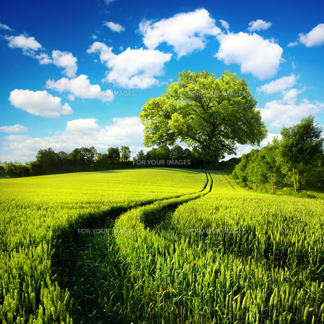 idyllic rural natureの写真素材 [FYI00646115]