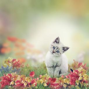 home_animalsの写真素材 [FYI00646304]