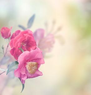 plants_flowersの写真素材 [FYI00646310]