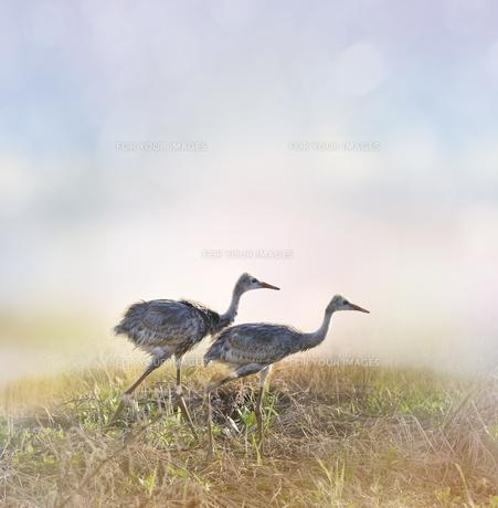 birdsの写真素材 [FYI00646314]