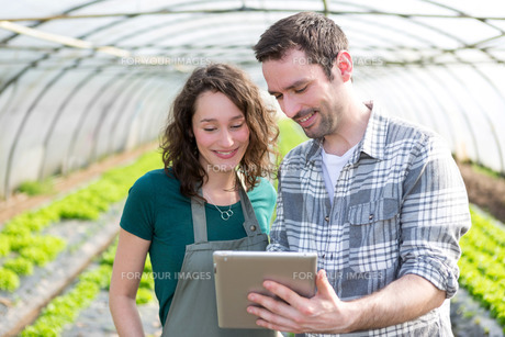 Farmers watching stats on tabletの写真素材 [FYI00646795]