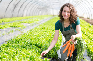 Young attractive farmer harvesting carrotsの写真素材 [FYI00646831]