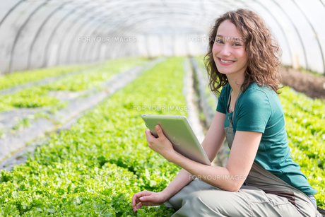 Portrait of an attractive farmer in a greenhouse using tabletの写真素材 [FYI00646836]