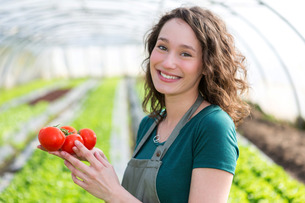 Young attractive farmer harvesting tomatoesの写真素材 [FYI00646905]