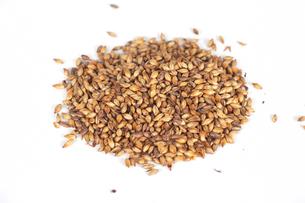 malt grainsの写真素材 [FYI00647566]