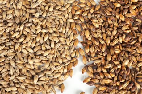 malt grainsの写真素材 [FYI00647569]