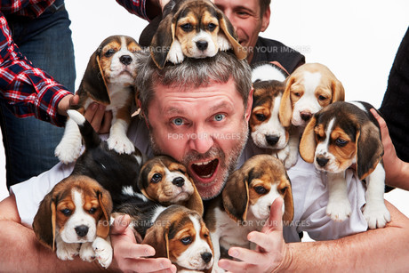The man and big group of a beagle puppiesの写真素材 [FYI00647798]